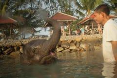 Bagnando gli elefanti nel golfo del Siam Fotografia Stock