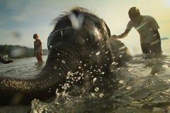 Bagnando gli elefanti nel mare sull'isola di Ko Cang Fotografie Stock Libere da Diritti