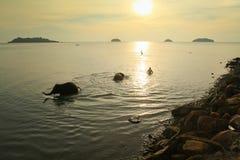 Bagnando gli elefanti nel mare in Tailandia Fotografia Stock