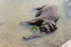 Bagnando nel fiume un elefante Fotografia Stock