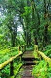 Bagni il modo di camminata di legno del ponte di traccia al sempreverde f della montagna della collina Immagini Stock