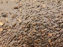 Bagni la cenere bruciata di erba ha solidificato da pioggia in fango scuro Innaffi la cenere appesa nella copertura Immagini Stock
