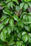 Bagni le foglie Fotografia Stock Libera da Diritti