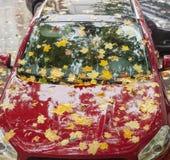 Bagni le foglie cadute sul cappuccio, sul parabrezza e sul tetto dell'automobile Immagini Stock Libere da Diritti