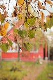 Bagni le foglie di un tiglio nella caduta dopo una pioggia contro il hous Immagine Stock Libera da Diritti