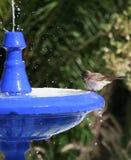 Bagno 5 dell'uccello Immagine Stock