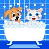 Bagno allegro del cane e del gattino nel bagno Immagine Stock