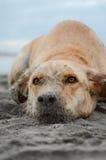 Bagno, baia, baygold, spiaggia, blu, tana, fine su, colore, sporco, cane, occhi, ripugnanti, stile di vita, fangoso, smorzato, al immagine stock