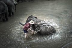 Bagno degli elefanti a Mae Sa Elephant Camp, Mae Rim, Chiang Mai Immagine Stock Libera da Diritti