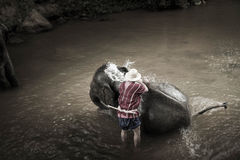 Bagno degli elefanti a Mae Sa Elephant Camp, Mae Rim, Chiang Mai Fotografia Stock
