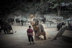 Bagno degli elefanti a Mae Sa Elephant Camp, Mae Rim, Chiang Mai Fotografie Stock