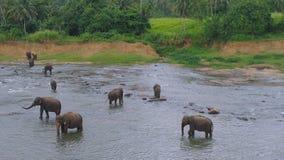 Bagno degli elefanti sul fegato Fotografia Stock Libera da Diritti