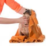Bagno del cane fotografie stock