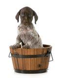 Bagno del cucciolo fotografia stock libera da diritti