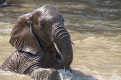 Bagno dell'elefante Immagini Stock