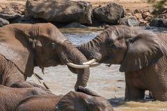 Bagno dell'elefante Fotografia Stock