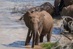 Bagno dell'elefante Immagine Stock