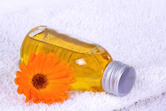 Bagno dell'olio, calendula Immagine Stock