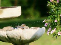 Bagno dell'uccellino azzurro Fotografie Stock Libere da Diritti