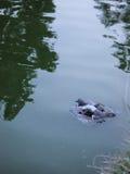 Bagno dell'uccello Fotografia Stock Libera da Diritti