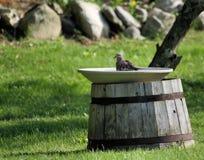Bagno dell'uccello Fotografia Stock