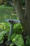 Bagno dell'uccello nel giardino del cortile Immagine Stock Libera da Diritti