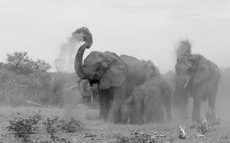 Bagno di fango dell'elefante Immagini Stock
