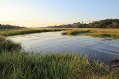 Bagno i trawy Zdjęcia Stock