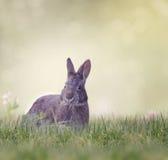 Bagno królika karmienie Zdjęcie Royalty Free