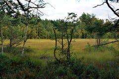 Bagno lasu krajobraz Zdjęcie Royalty Free