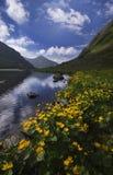 Bagno nagietek kwitnie przy Rackove pleso jeziorem, Zachodni Tatras Obraz Stock