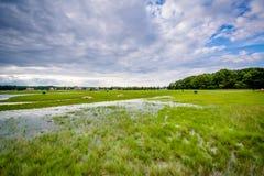 Bagno przy Odiorne punktu stanu parkiem w życie, New Hampshire obrazy stock