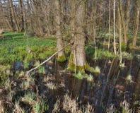Bagno przy wczesnym wiosna czasem Fotografia Royalty Free