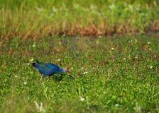 Bagno ptak Obraz Royalty Free
