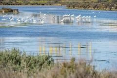 Bagno ptaki w Puerto realu, Cadiz, Hiszpania Fotografia Royalty Free