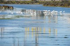 Bagno ptaki w Puerto realu, Cadiz, Hiszpania Zdjęcia Royalty Free