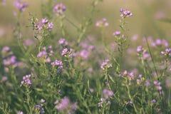bagno roślinność zamknięta w górę traw bents i ulistnienia z - rocznika retro ekranowy spojrzenie fotografia royalty free