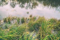 Bagno trawa, turzyca jeziorem zdjęcia royalty free