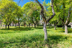 Bagno Vignoni, meadow with trees, Tuscany Stock Photo
