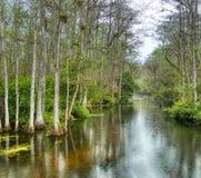 Bagno w Du?ej Cyprysowej Krajowej prezerwie, Floryda, Stany Zjednoczone fotografia stock