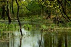 Bagno w lesie Obraz Stock