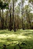 Bagno w zieleni. Zdjęcie Royalty Free