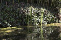 Bagno z Tina i roślinami obrazy royalty free