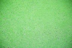 bagno zielona woda Zdjęcia Stock