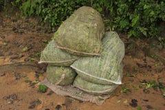 Bags of ceylon tea leaves, Sri Lanka Stock Images