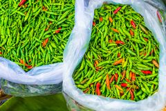 Bags of fresh green and red spicy Thai chilis being sold at a lo. Bags full of fresh green and red spicy Thai chilis being sold at a local fresh market in Royalty Free Stock Photography