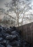 Bags of garbage in metal dumpster Royalty Free Stock Photo