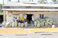 Bags of maize and rice outside a local store Royalty Free Stock Images
