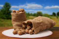 Bags With Nuts On a Table Royalty Free Stock Photo