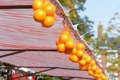 Bags of oranges hanging in net at market stall Stock Photo